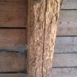 Dřevo napadené červotočem